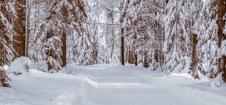 Organizacja kursów językowych w trakcie ferii zimowych